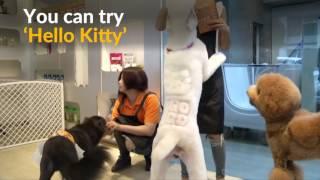 Taiwan salon gives pets whacky fur styles