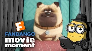 Minions At the Movies React to The Secret Life of Pets - Fandango Movie Moment (2016)