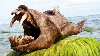 10 Most Bizarre Deep Sea Creatures