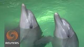 Dolphin inspired sonar technology