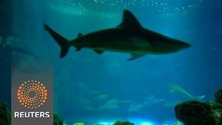 Paris aquarium successfully breeds blacktip sharks