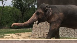 Pakistan's lonely elephant suffering 'mental illness': experts
