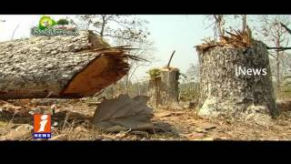 Green Revolution and Haritha Haram | Idinijam | iNews