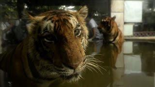 Tiger cubs charm Manila zoo visitors
