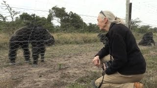 Conservationist Jane Goodall visits Kenyan chimp sanctuary