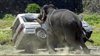 Craziest Animal Fights Caught On Camera - Most Amazing Wild Animal Attacks