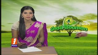 Special Focus On Haritha Haram In Telangana | TRS Leaders Participate Actively | iNews