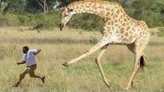 Most Horrifying Animals Attacks on Humans in all time !!