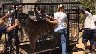Raw: Animals Return to Sanctuary After Wildfire