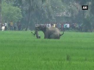 झुंड से अलग हुए दो हाथी,दोनों ने मचाया जमकर आतंक