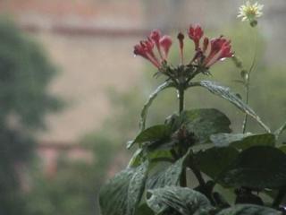 दिल्ली : बारिश के बाद मौसम हुआ सुहाना