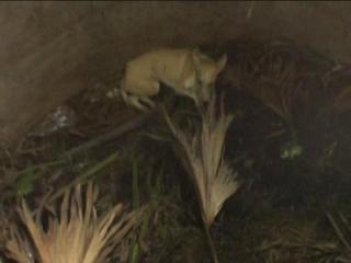सूखे कुएं में गिरे कुत्ते को फायर ब्रिगेड ने निकाला