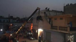 छत पर चढ़ा सांड, देखिए Live Rescue