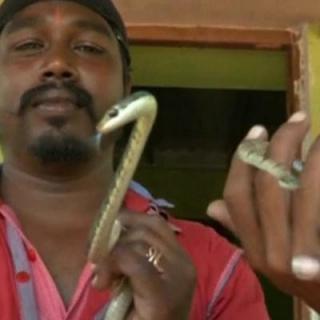 कोयंबटूर में रेस्क्यू टीम ने उड़ने वाले सांप को पकड़ा