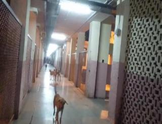 दिल्ली : सरकारी अस्पताल में घूम रहे हैं कुत्ते