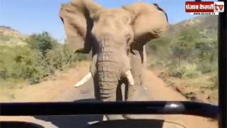 जब अरनॉल्ड श्वाजनेगर का सामना हुआ जंगली हाथी से