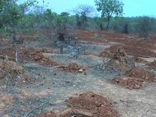 सीएम के ड्रीम प्रोजेक्ट की आड़ में पेड़ों का अवैध कटान