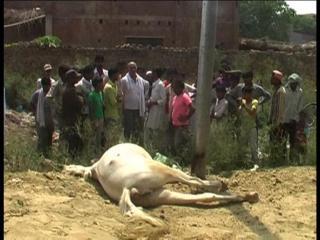 करंट लगने से घोड़ी की मौत, लोगों ने किया हंगामा