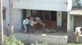 घर में घुसा तेंदुआ, सूचना के बाद नहीं आया वन विभाग