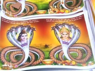 शिव भक्तों ने हर्षोल्लास से मनाई नाग पंचमी