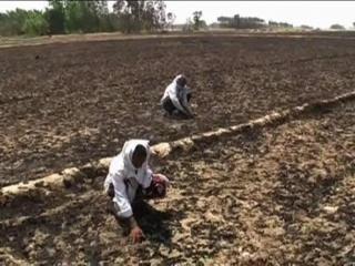 सिद्धार्थनगर आगजनी के पीड़ित किसान कर रहे मदद की आस...
