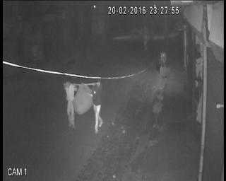 CCTV में देखिए जाट आंदलोन के दौरान कैसे मची लूट
