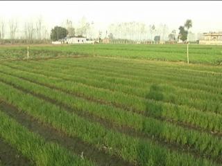 प्राकृतिक खेती कर एक साथ पांच-पांच फसल उगा रहा है यह किसान