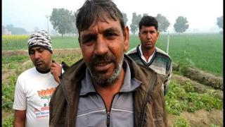 किसान के खेत में उगी अजीब तरह की फसल, उमड़ी भीड़