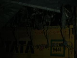 हिसार में पशु मांस से भरा ट्रक बरामद, दो गिरफ्तार