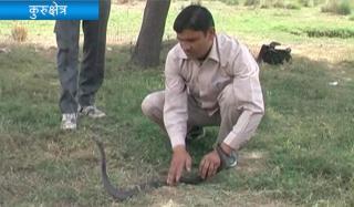 विषधर सांपों को चुटकियों में पकड़ लेता हैं कुरुक्षेत्र का Snake Man