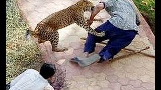 When Animal Attacks Human  -  Amazing Video Compilation 2016