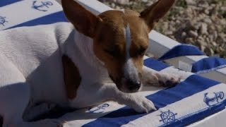 Pups Soak in The Sun On Croatia's New Dog Beach