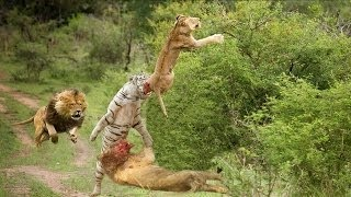 15 CRAZIEST Animal attacks Caught On Camera Most Amazing Wild Animal Attacks