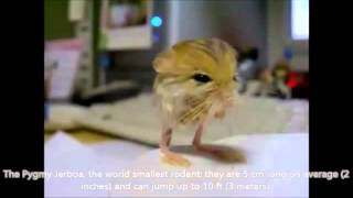The 10 Smallest Animals In the World-Vishwa Gujarat