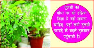 Astrology Tips for Plant & Trees. #AcharyaAnujJain दुर्भाग्य बढता है, पेड-पौ&#23