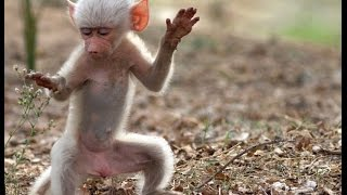 Funny Monkey Dance Video : People Enjoyed Allot