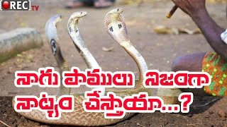It is Snake can hear the sounds - Snake Dance Mystery