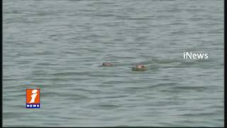 Grey Seal Found in Prakasam Barrage iNews