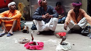 funny indian snake street play ...