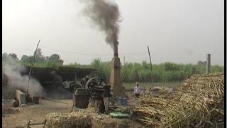 नोटबंदी का गन्ना किसानों पर पड़ा असर, मिलों से नहीं हो रहा भुगतान