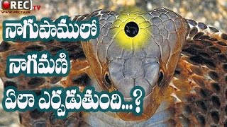Mystery Behind Snake Stone or Diamond in Cobras - Telugu Mystery