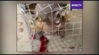 Alien caught on Kerala and Karnataka Border
