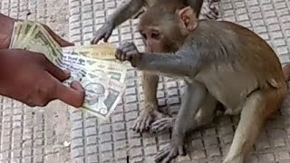 500 and 1000 rupee notes whatsapp video funny video