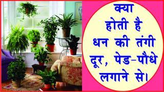 Do Plants change luck and fortune? #acharyaanujjain क्या होती है धन की तंगी दू&#