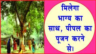Worship Peepal tree for good luck. #acharyaanujjain मिलेगा भाग्य का साथ, पीपल &#