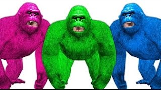Animal Rhymes For Kids - Gorilla All Motions For Childrens - TSP KIds Rhymes
