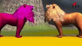 Lion vs Lion Animal Fighting Rhymes For Children - Cololur Animal Songs For Kids - TSP Kids Rhymes