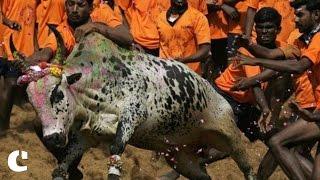 Jallikattu continues in parts of Tamil Nadu despite SC ban