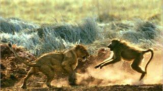 Most Amazing Wild Animal Attacks