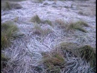 मैदानी इलाके में ठंड ने कराया शिमला और कश्मीर का अहसास